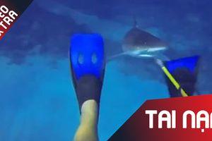 Cá mập hung tợn bất ngờ tấn công thợ lặn