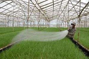 Tháo gỡ cấp GCN tài sản hình thành trên đất nông nghiệp