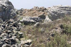 Quảng Ngãi: Vứt lăn lóc 'báu vật' san hô hóa thạch 6.000 tuổi?