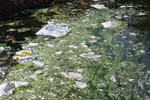 Hà Tĩnh: Hồ nuôi tôm xả nước đen ngòm bốc mùi hôi thối, dân kêu trời vì không thở nổi
