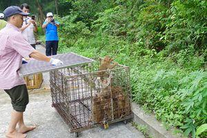 Nỗ lực cứu hộ động vật hoang dã