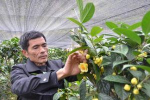 Trồng 'vàng xanh' trên đất cằn, bán hoa 22 triệu/kg, lá 300 ngàn/kg