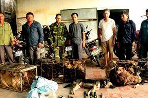 Hà Tĩnh: Triệt phá đường dây trộm chó, tạm giữ 6 'cẩu tặc'