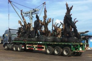 Nhiều cây 'tiểu quái thú' đi bằng đường thủy ra Bắc