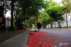 Xao xuyến mùa hoa lộc vừng trên phố Vinh