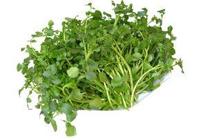 Rau cải xoong - Món ăn ngon, vị thuốc tốt