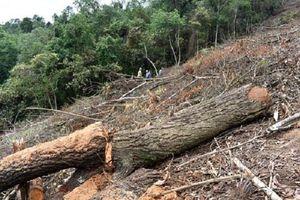 Phó Thủ tướng yêu cầu xử lý nghiêm vụ gần 11ha rừng tự nhiên ở Bắc Kạn bị phá