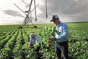 Bayer sớm hoàn tất thương vụ mua lại Monsanto