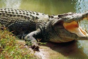 Ethiopia: Cá sấu bất ngờ trồi lên bắt mục sư bên hồ nước ăn thịt