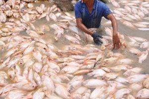 Thất vọng vì thông tin cá chết do thiên tai, dân La Ngà bỏ tiếp xúc cử tri