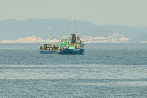 Phú Yên: Chính quyền cấp trên 'tuýt còi' cấp dưới, doanh nghiệp chịu thiệt