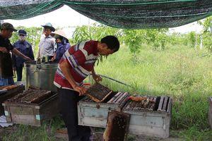 Tận dụng vườn chanh dây nuôi ong mật