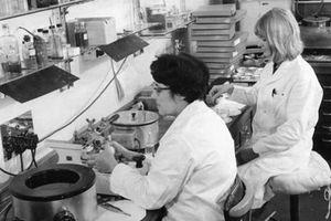 Tiết lộ vụ thử nghiệm thuốc LSD tuyệt mật của Thủy quân Hoàng gia Anh