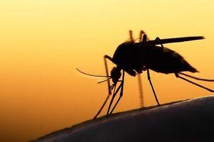 7 bệnh nguy hiểm lây lan qua muỗi mà chúng ta phải biết!