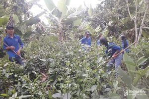 Tuổi trẻ Thái Hòa sôi nổi với nhiều hoạt động tình nguyện