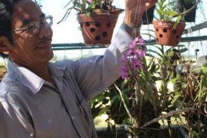 Vườn lan rừng đẹp mê mẩn của thầy giáo già dạy Văn ở Quảng Ngãi
