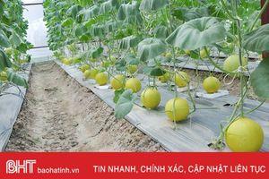Nông dân Hà Tĩnh ứng dụng công nghệ nhà màng, tạo nguồn thu lớn