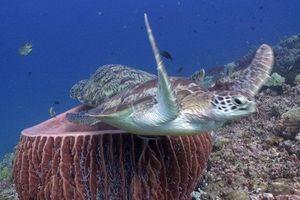 Rùa biển hậm hực vì bị tranh cả chỗ ngủ