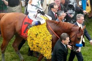 Giật mình chú ngựa có giá 1.369 tỷ đồng, phối giống mỗi lần hơn 2 tỷ đồng