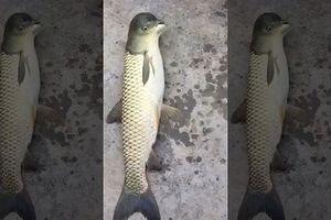 Sinh vật lạ 'mình cá đầu chim' khiến cư dân mạng xôn xao