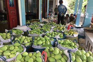 Đồng Tháp thành lập Tổ thông tin và Phân tích thị trường nông sản