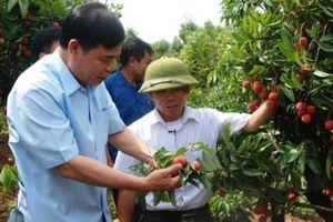 Bộ trưởng Nguyễn Xuân Cường: Lục Ngạn tiếp tục đẩy mạnh tiêu thụ vải