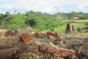 Ngang nhiên đưa xe bánh xích vào phá rừng ở Đắk Lắk