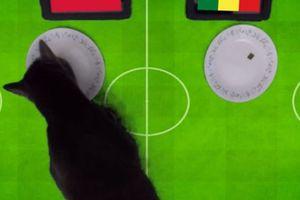 Clip: 'Tiên tri' mèo dự Cass đoán trận đấu Ba Lan vs Senegal