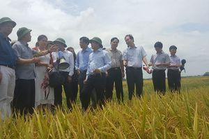Trồng trọt hữu cơ - hướng phát triển nông nghiệp sạch