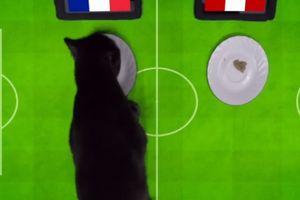 Clip: Mèo đen 'tiên tri' Cass dự đoán trận Pháp vs Peru