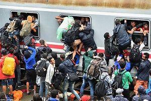 Visegrad hối thúc EU bảo vệ biên giới khối trước nỗi lo người nhập cư