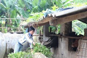 Nguồn vốn ưu đãi giúp đẩy nhanh quá trình xây dựng nông thôn mới
