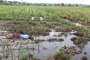 Nam Định: Phát hiện người phụ nữ tử vong giữa cánh đồng vắng