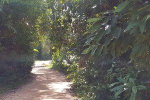 Thầy giáo lõa thể nằm bất động ở bìa rừng Phú Quốc