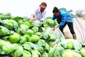 Để bảo hộ nông nghiệp hữu hiệu