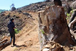 Nguyên tổng giám đốc cùng nhiều người phá hơn 64ha rừng