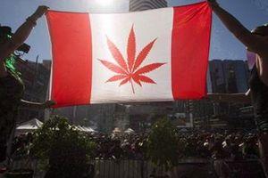 Dư luận Canada tranh cãi việc hợp pháp hóa cần sa