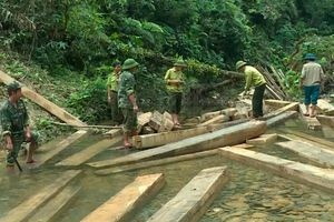 Phá rừng phòng hộ Quảng Bình: Nguyên đội trưởng kiểm lâm bị kỷ luật