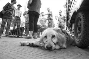 Vấn đề… thịt chó