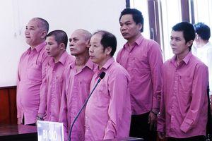 Hoãn xét xử 'đại án' phá rừng quy mô lớn nhất Bình Định