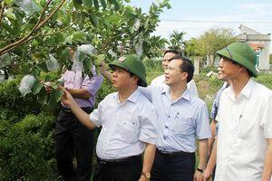 Ninh Bình: Tạo động lực mới, tạo sự bứt phá cho sản xuất nông nghiệp