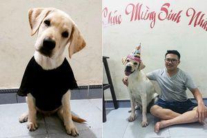 Cười rụng rốn: Chú chó Củ Cải tự nhận mình đẹp trai hơn hotboy Nam Định