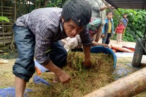 Mưa lũ tàn phá các tỉnh Tây Bắc: Tả tơi vựa lúa Than Uyên