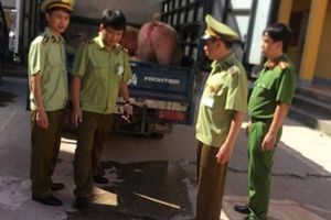 Lạng Sơn: Bắt 3 tấn thịt lợn nhập lậu từ Trung Quốc đưa vào nội địa