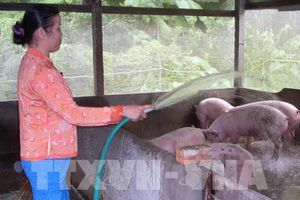 Đối phó với nắng nóng: Người chăn nuôi sợ nhất mất điện
