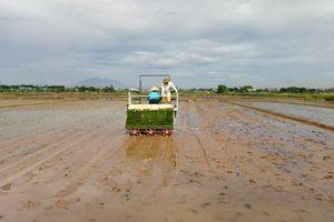 Không để ruộng đồng thiếu nước do nắng hạn