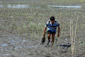 Nắng nóng đảo lộn cuộc sống: Mặn xâm nhập sớm