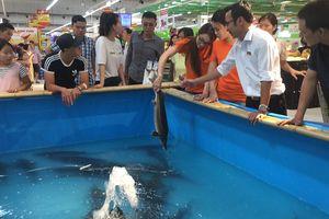 Những chú cá Sông Đà là khởi đầu mùa vụ Nhắm tới khát khao của các nhà sản xuất tạm được xếp vào loại nhỏ khi chỉ đủ năng lực cung cấp các hàng hóa đặc sản theo thời vụ, năm 2018 Bộ Công Thương đã có một kế hoạch đặc biệt khi kết nối cung cầu cho các sản