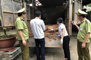 Nhập lập hơn 3 tấn lợn vào Việt Nam để tiêu thụ