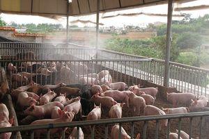 Bảo đảm nguồn cấp điện chống nóng cho vật nuôi